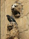 Pigeon and Lion, Piazza della Signoria, Florence